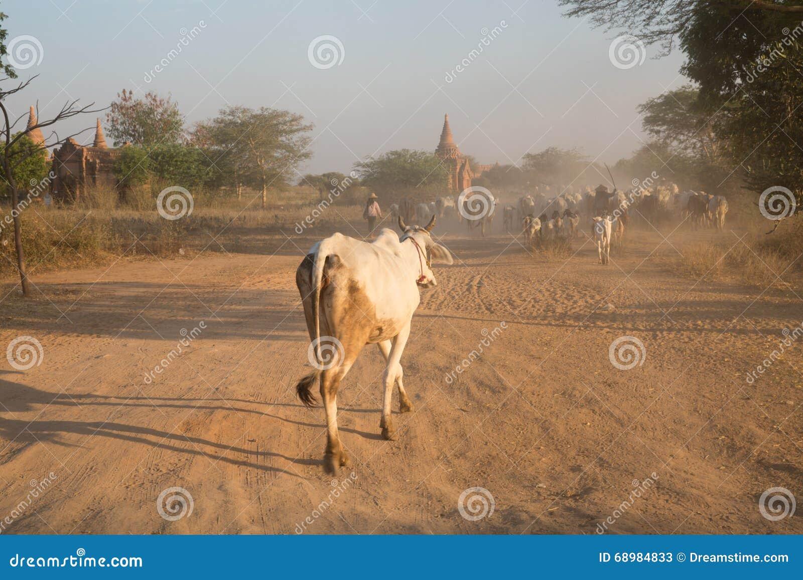 Agricultura de Myanmar