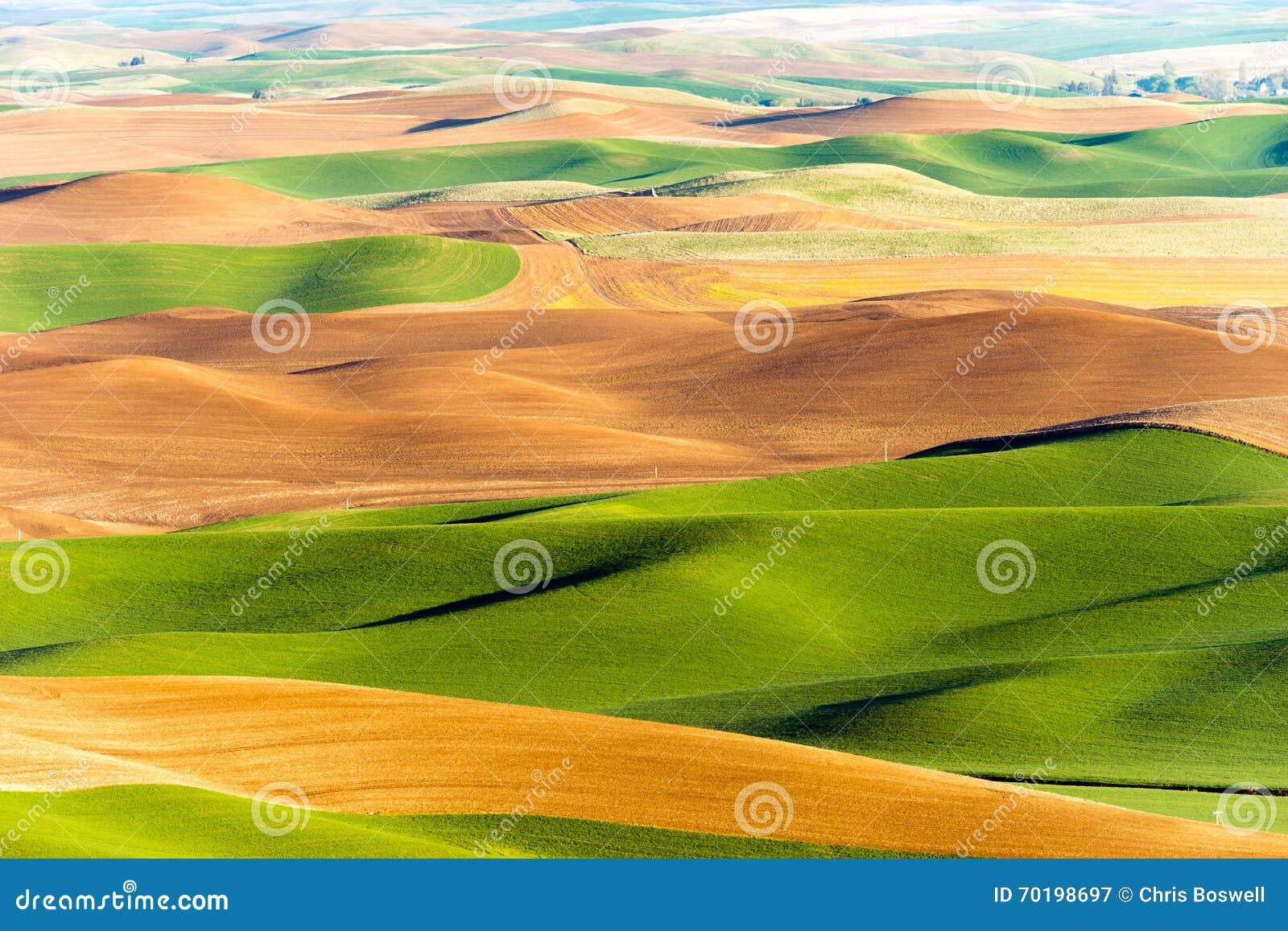Agricultura de Rolling Hills de las tierras de labrantío de la mota de Steptoe de la región de Palouse
