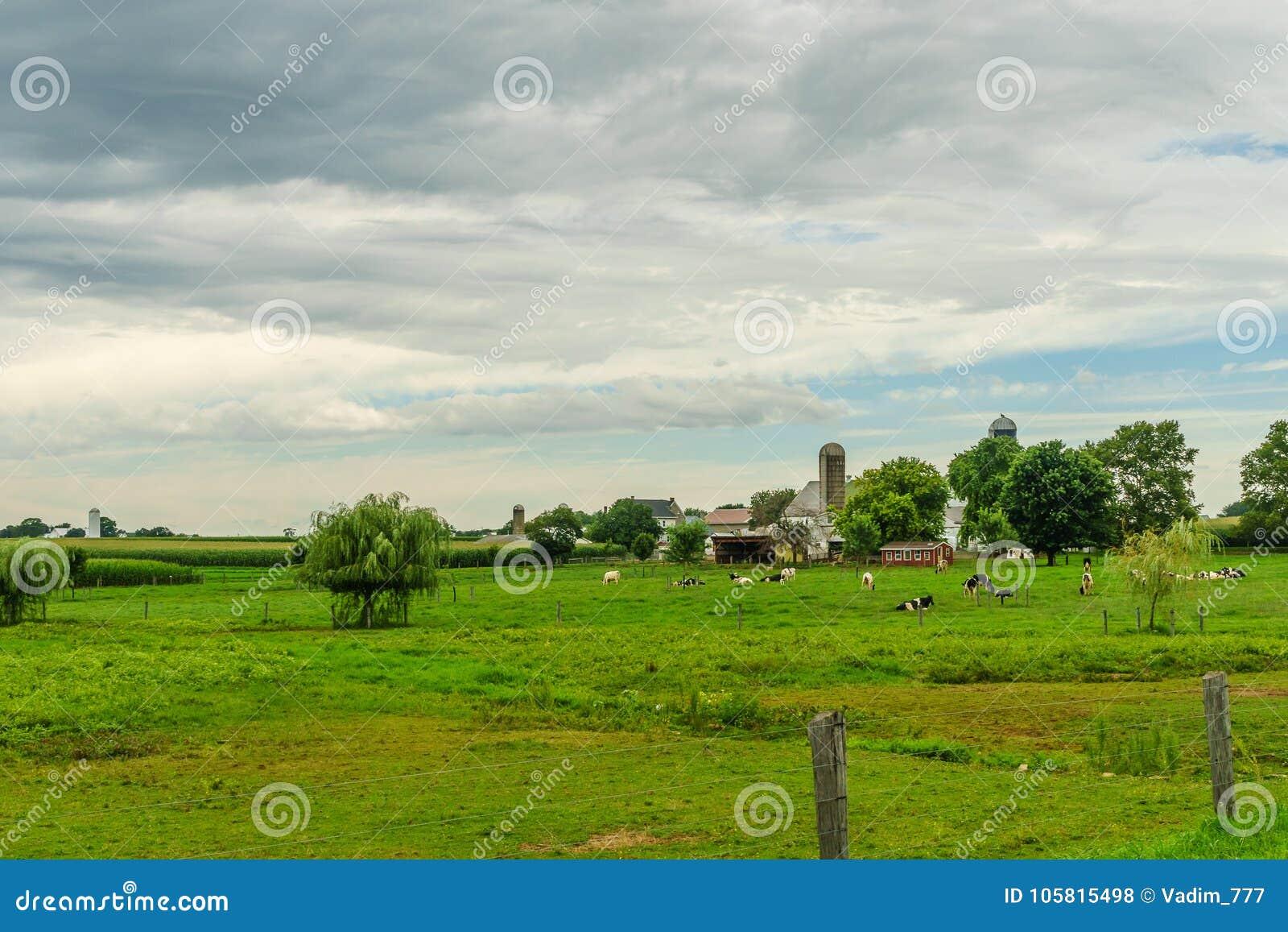 Agricultura do campo do celeiro da exploração agrícola do país de Amish e vacas da pastagem em Lancaster, PA