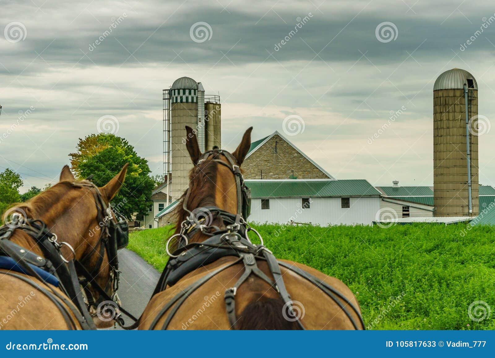 Agricultura e mangueiras do campo de exploração agrícola do país de Amish em Lancaster, PA