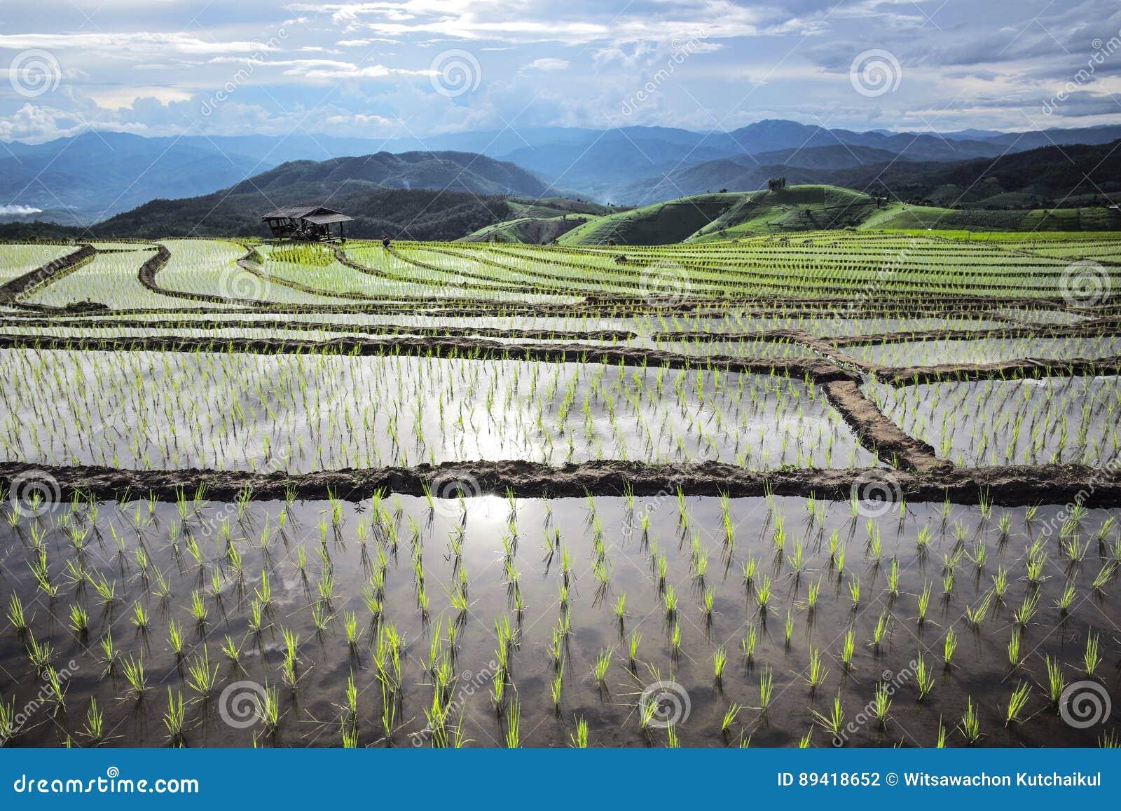 Agricultura em montanhas altas