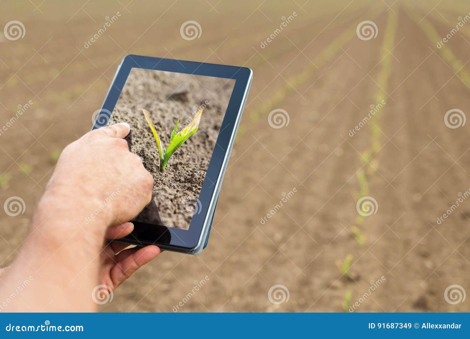 Agricultura esperta Fazendeiro que usa a tabuleta Dano de Frost às plantas
