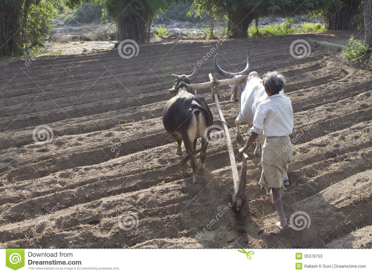 Agricultura rural