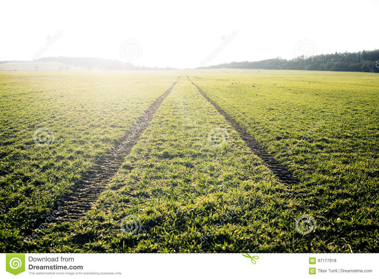 Agricultural fields. Spring time. Traces in land from the tractor. Sunset