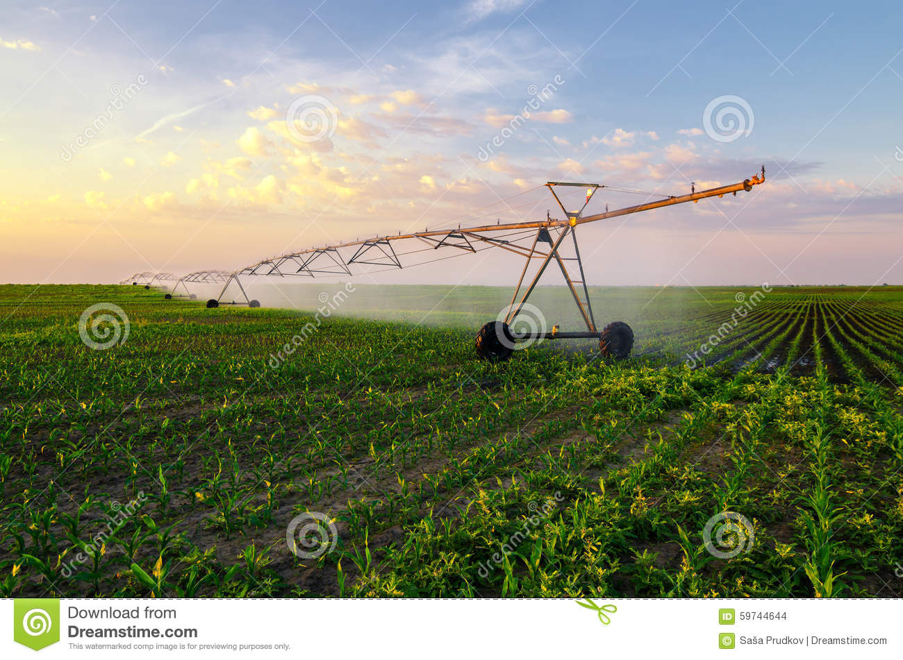 Agricultural irrigation system watering corn field on sunny summer day