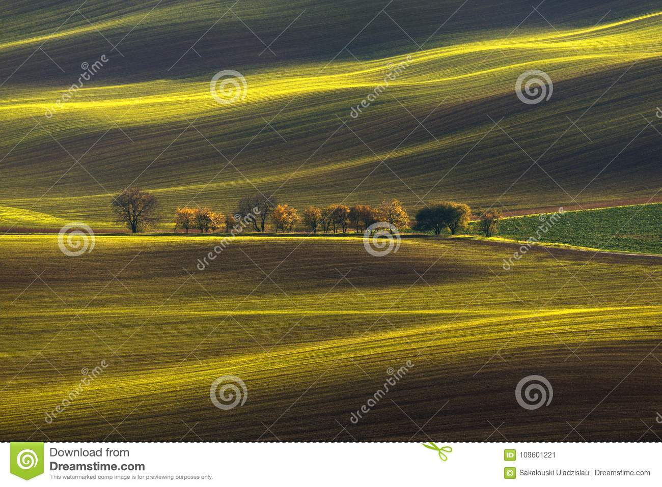 Agricultural Rolling Spring / Autumn Landscape.Natural Landscape In Brown And Yellow Color. Waved Cultivated Row Field With Beauti