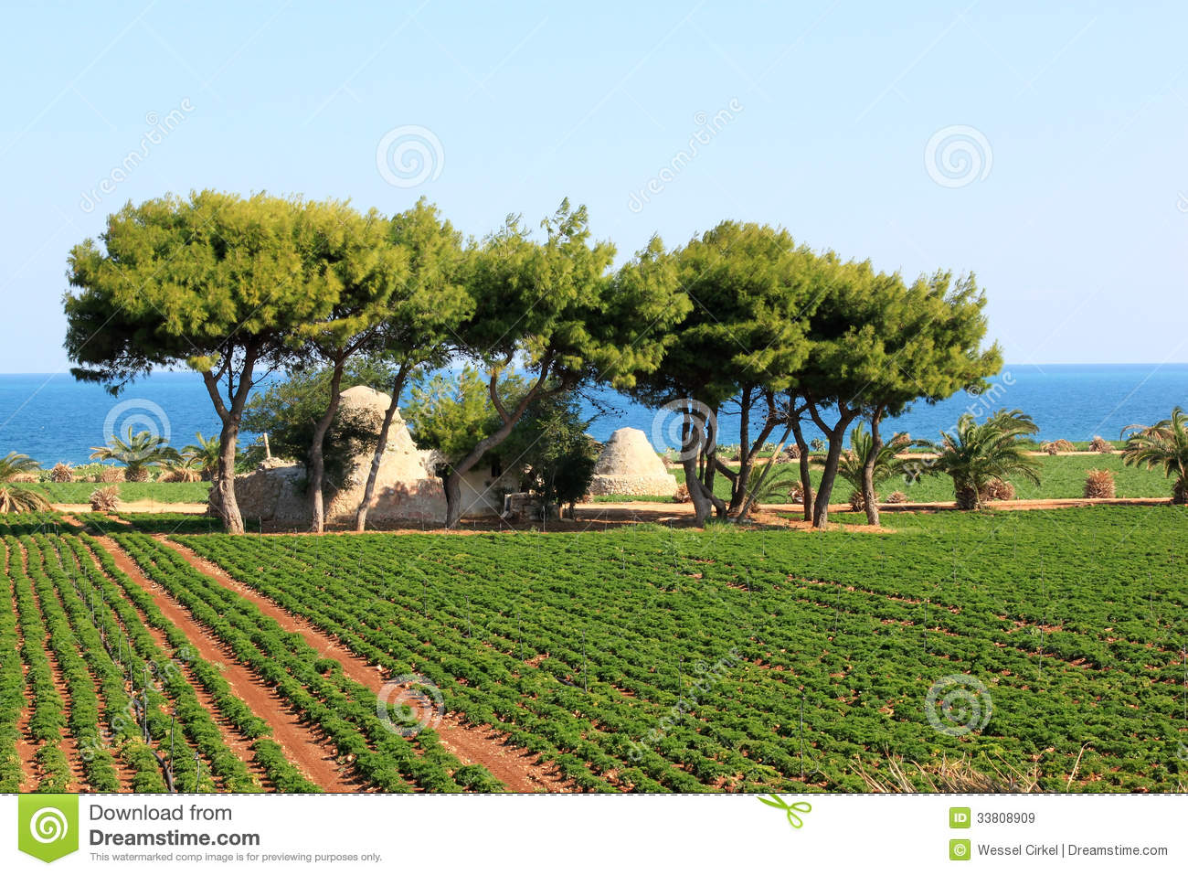 Agriculture Along The Adriatic Sea Italy Royalty Free