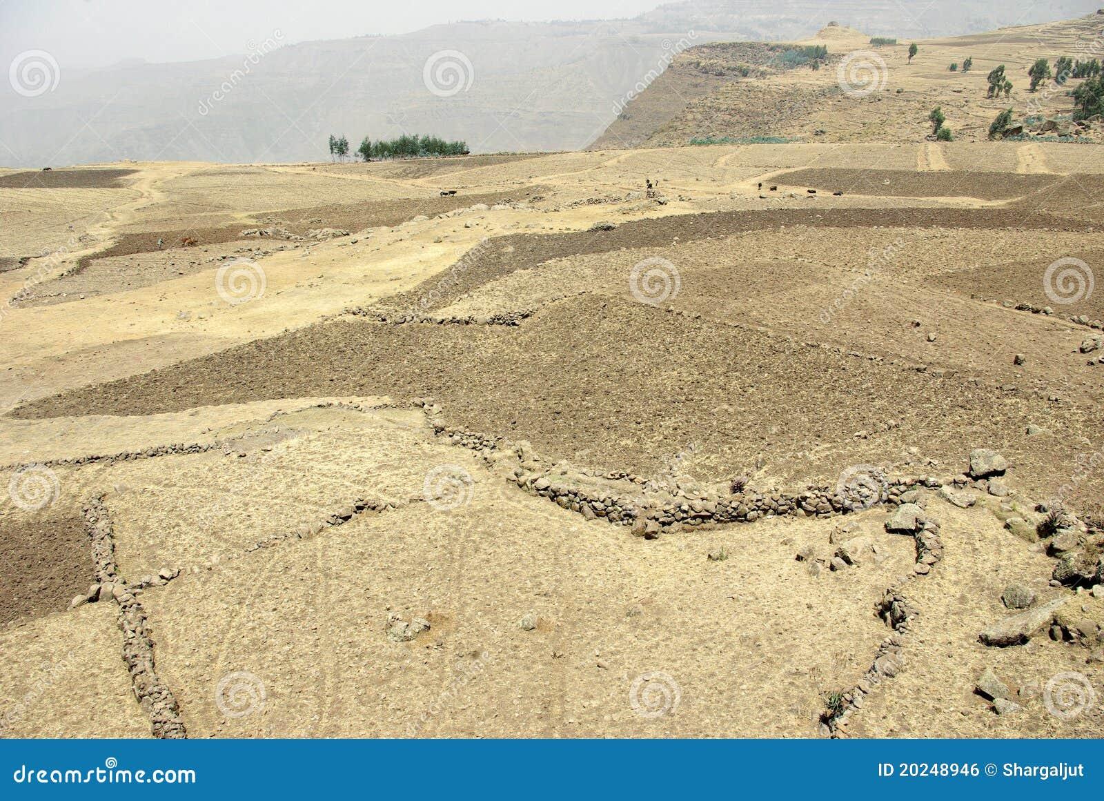 Agriculture area - Ethiopia