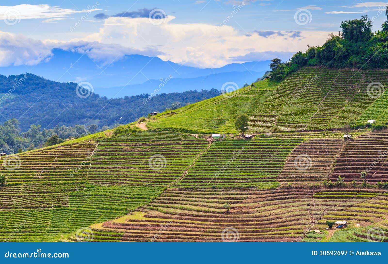 Agriculture De Terrasse Sur La Montagne Tropicale