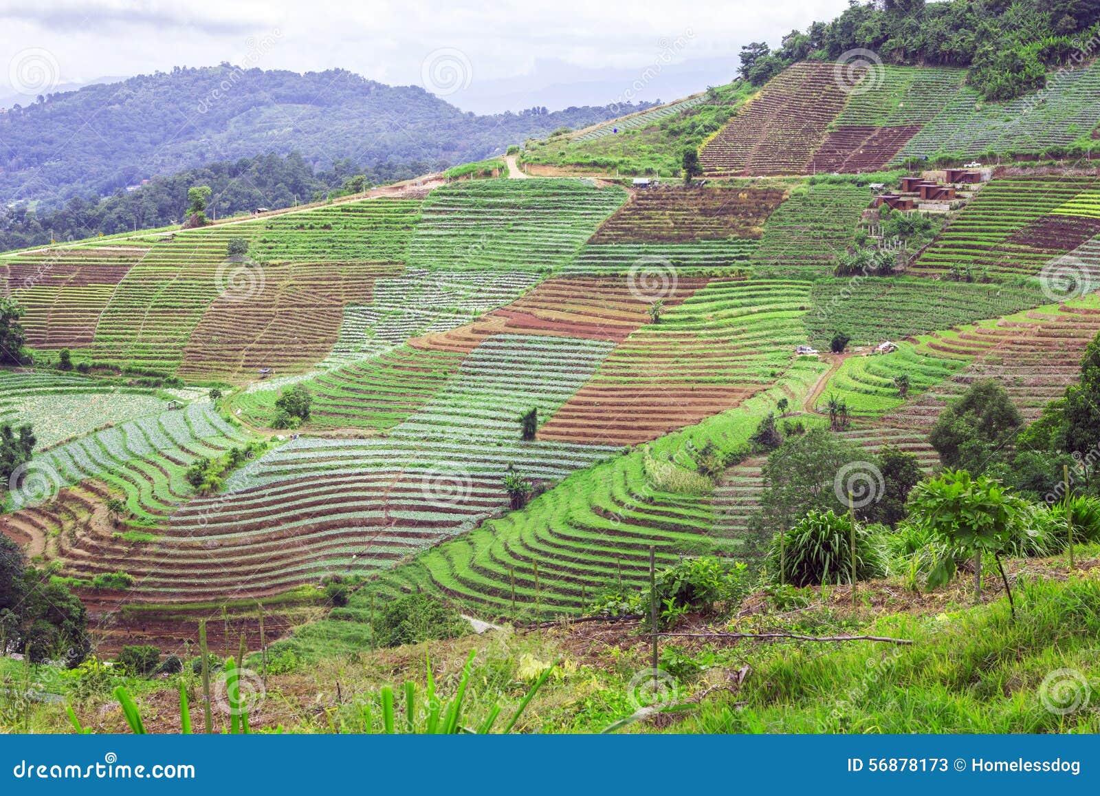 Agriculture De Terrasse Sur La Montagne Tropicale, Chiang