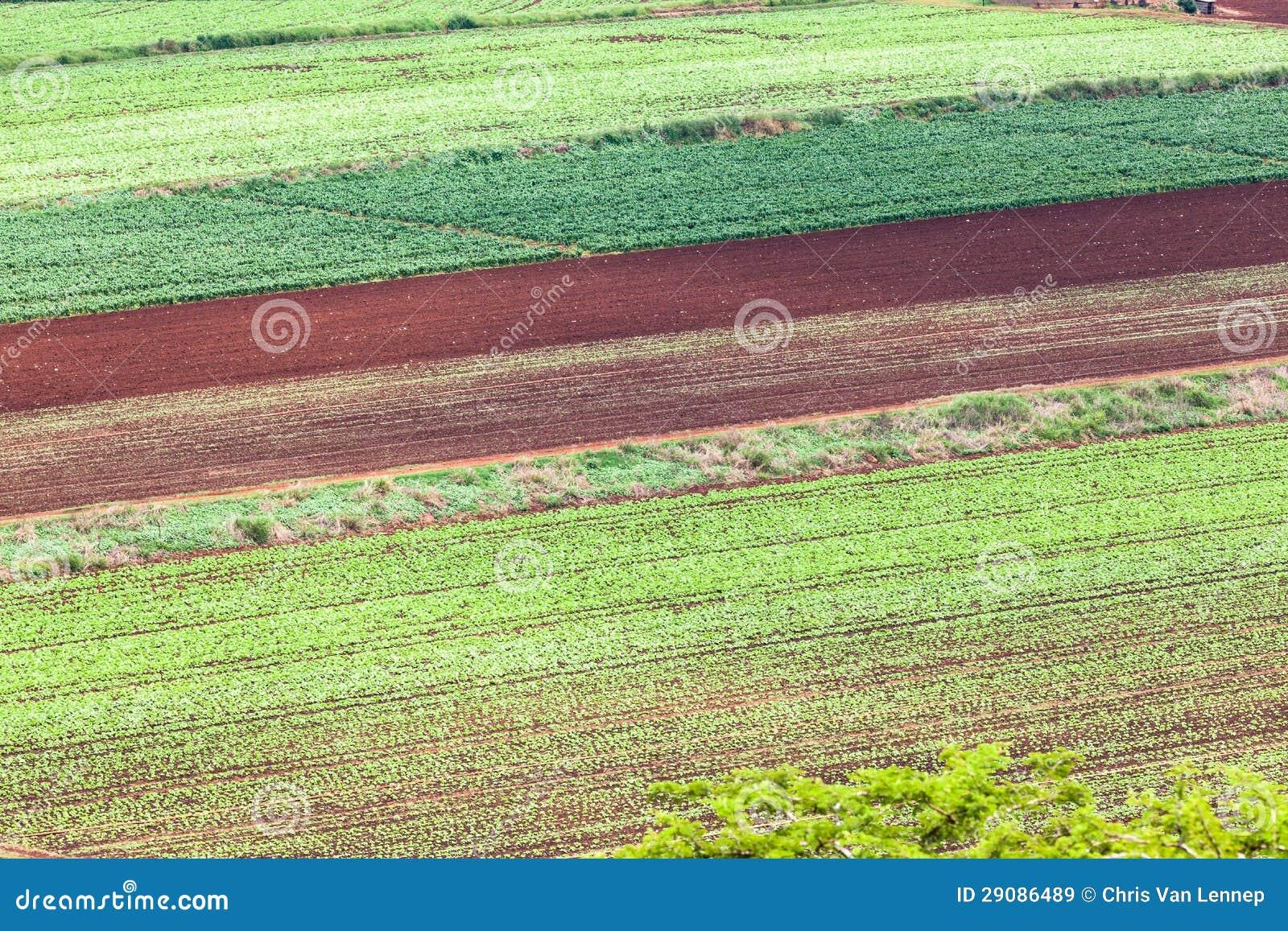 Agriculture des collectes de légumes