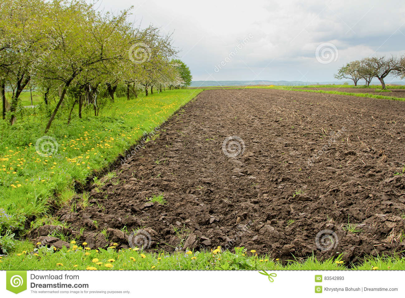 Agriculture field with black soil and cherry trees on for Black garden soil