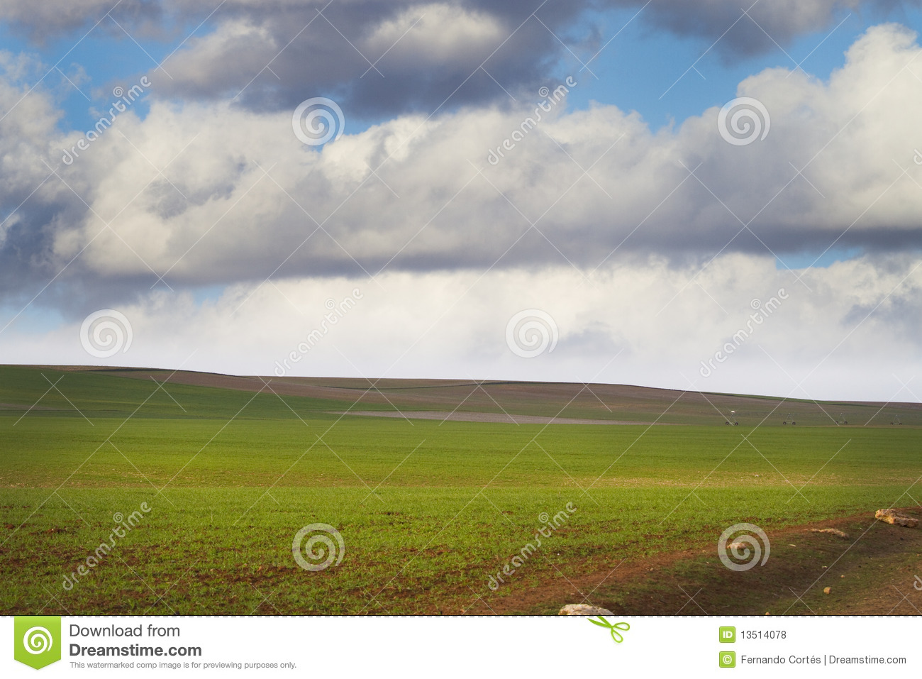 Agriculture field, green nature