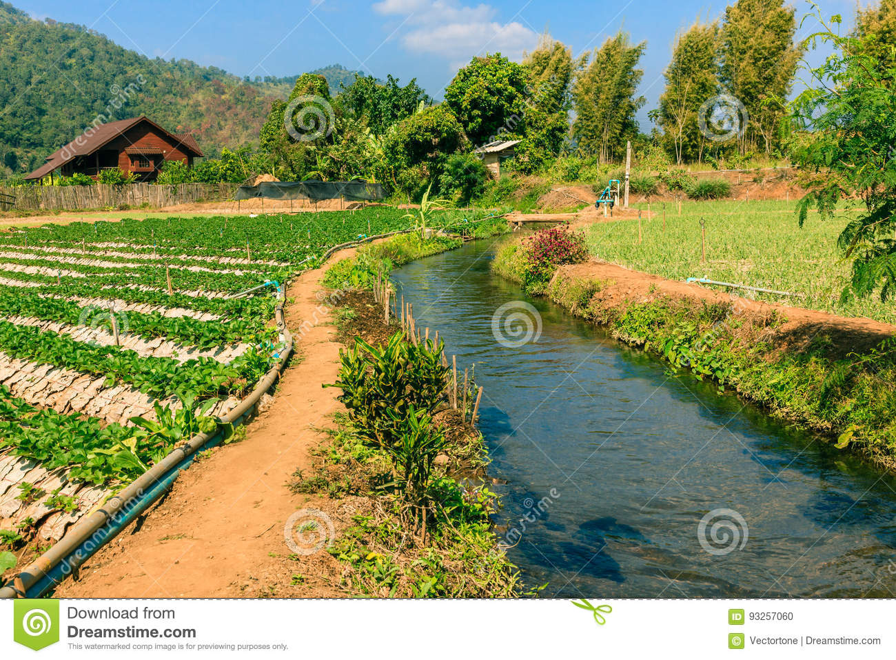 Agriculture field of mix organic farm and irrigation system.