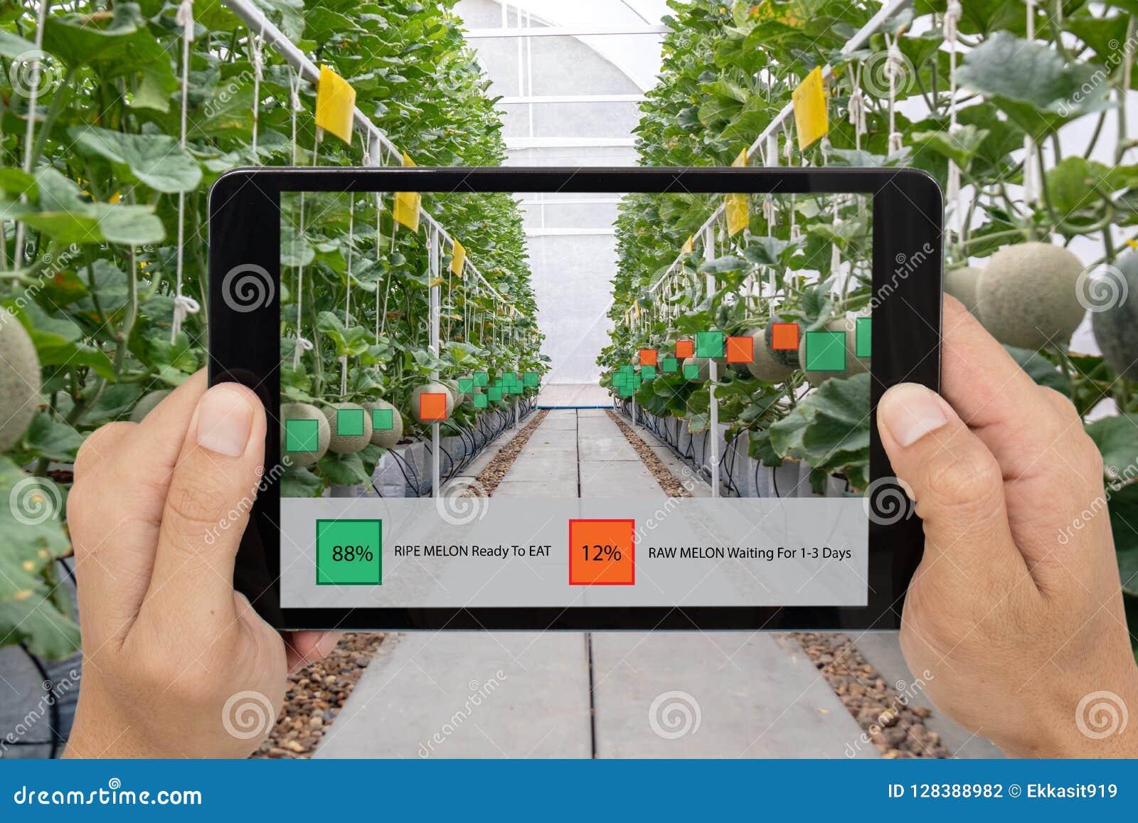 Agriculture futée d Iot, industrie 4 d agriculture 0 concepts de technologie, prise d agriculteur le comprimé à employer ont augm