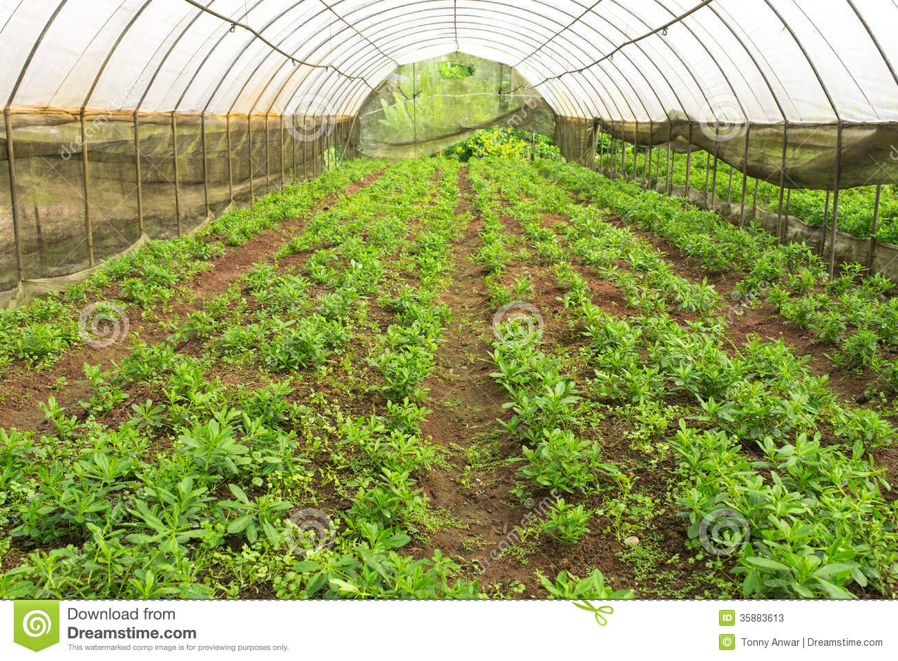 content industry agriculture seafood animals crops crop production greenhouse vegetables