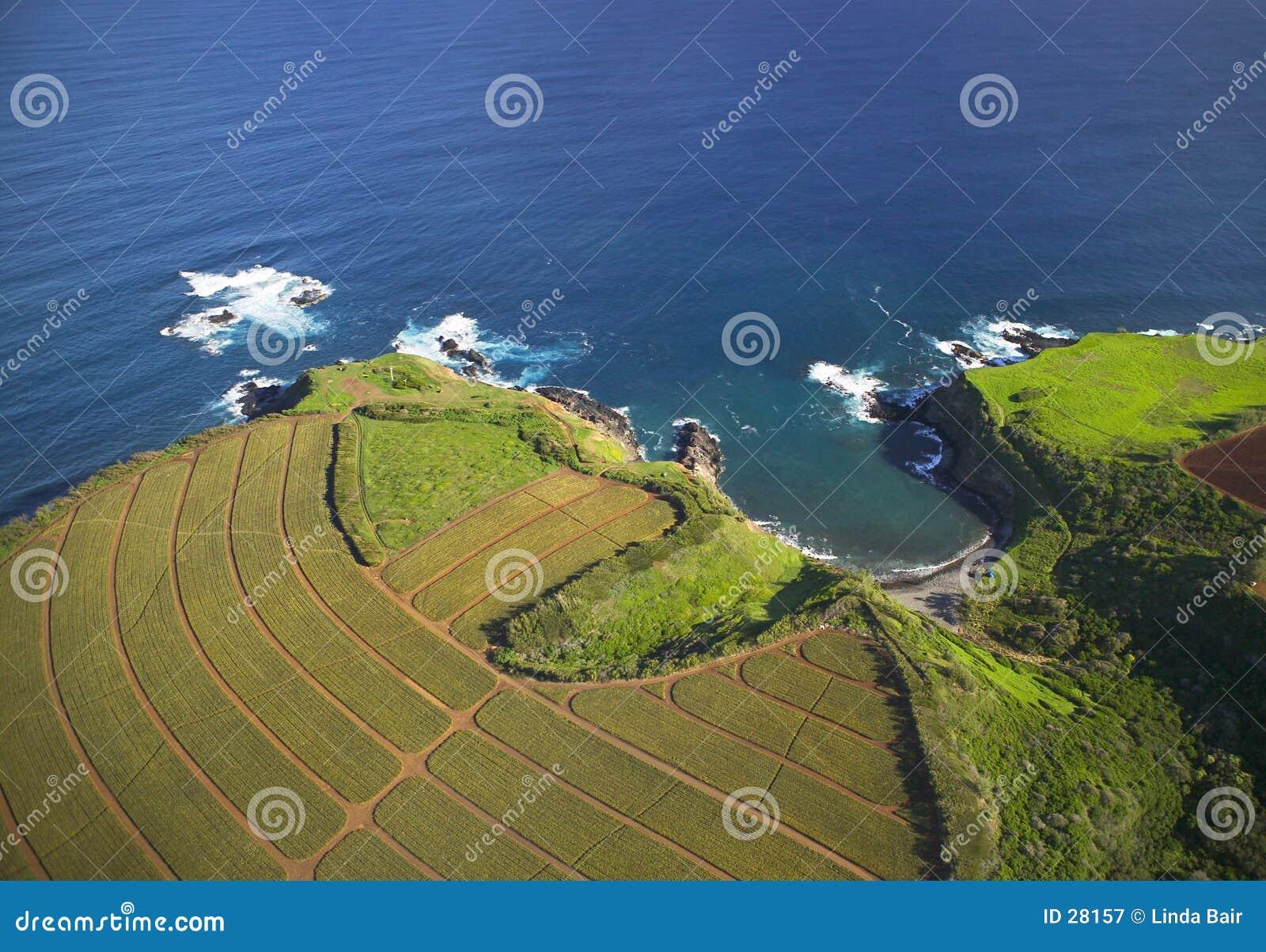 Agriculture hawaïenne côtière