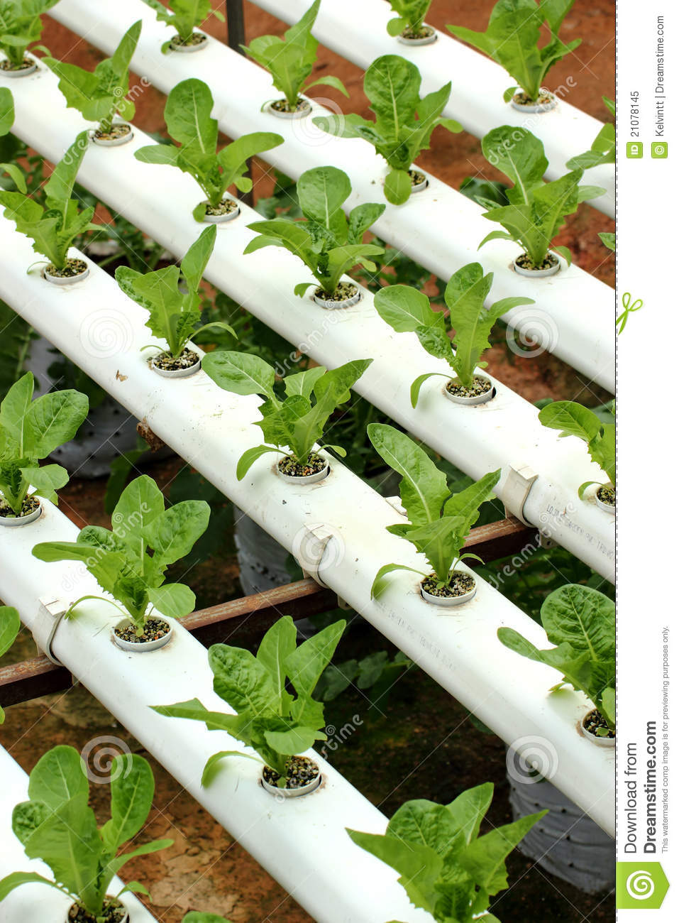 Image Result For Hydro Seeds For Sale