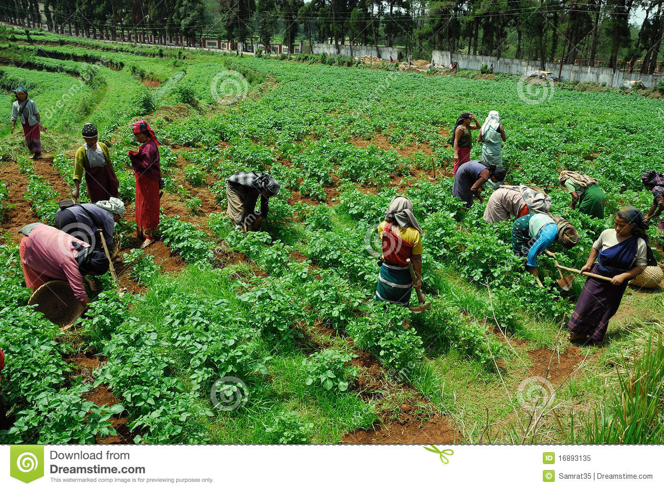 Agriculture indienne