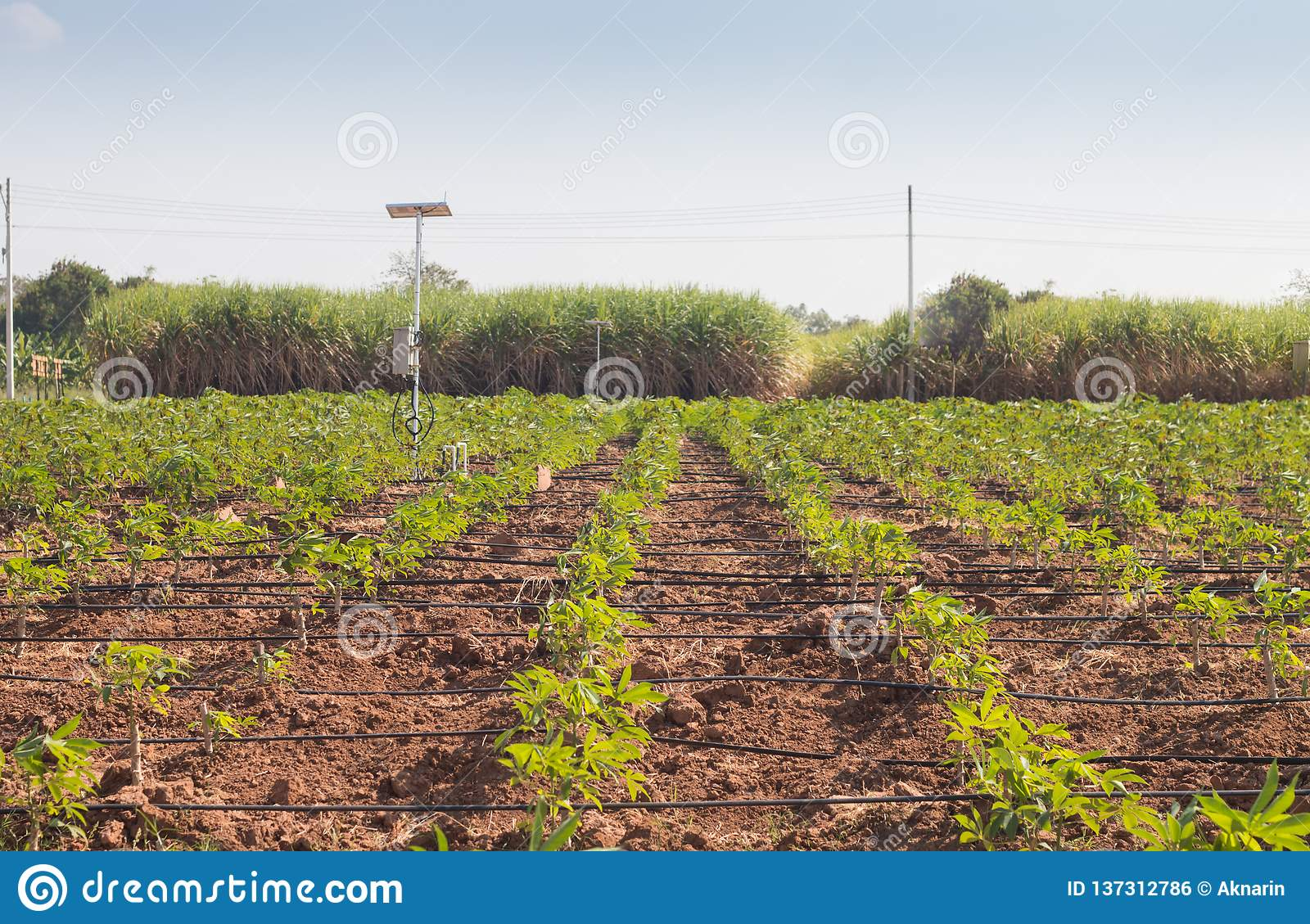 Agriculture And Internet Of Things , Smart Farmer Stock