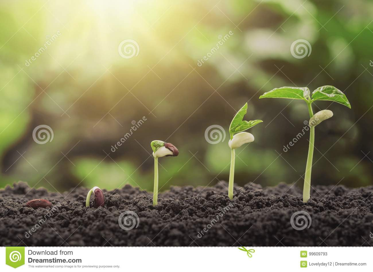 Agriculture Plant Seeding Growing Step Concept In Garden And Su ...