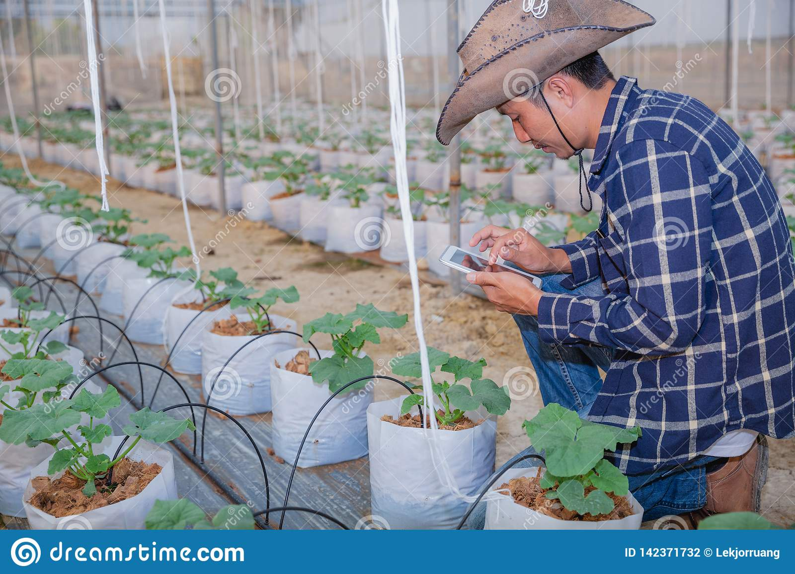 Agriculture technology farmer man using tablet computer analysis data. The agronomist examining the growth of plants on the