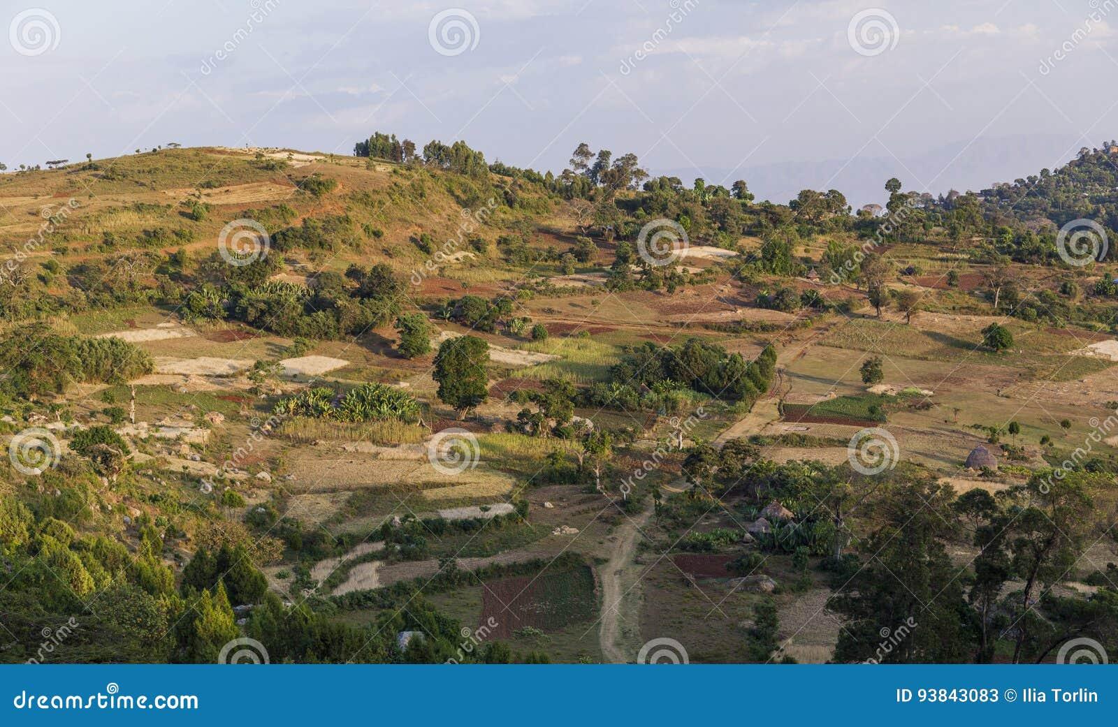 Agriculture traditionnelle de terrasse de personnes de Dorze Près du village de Hayzo