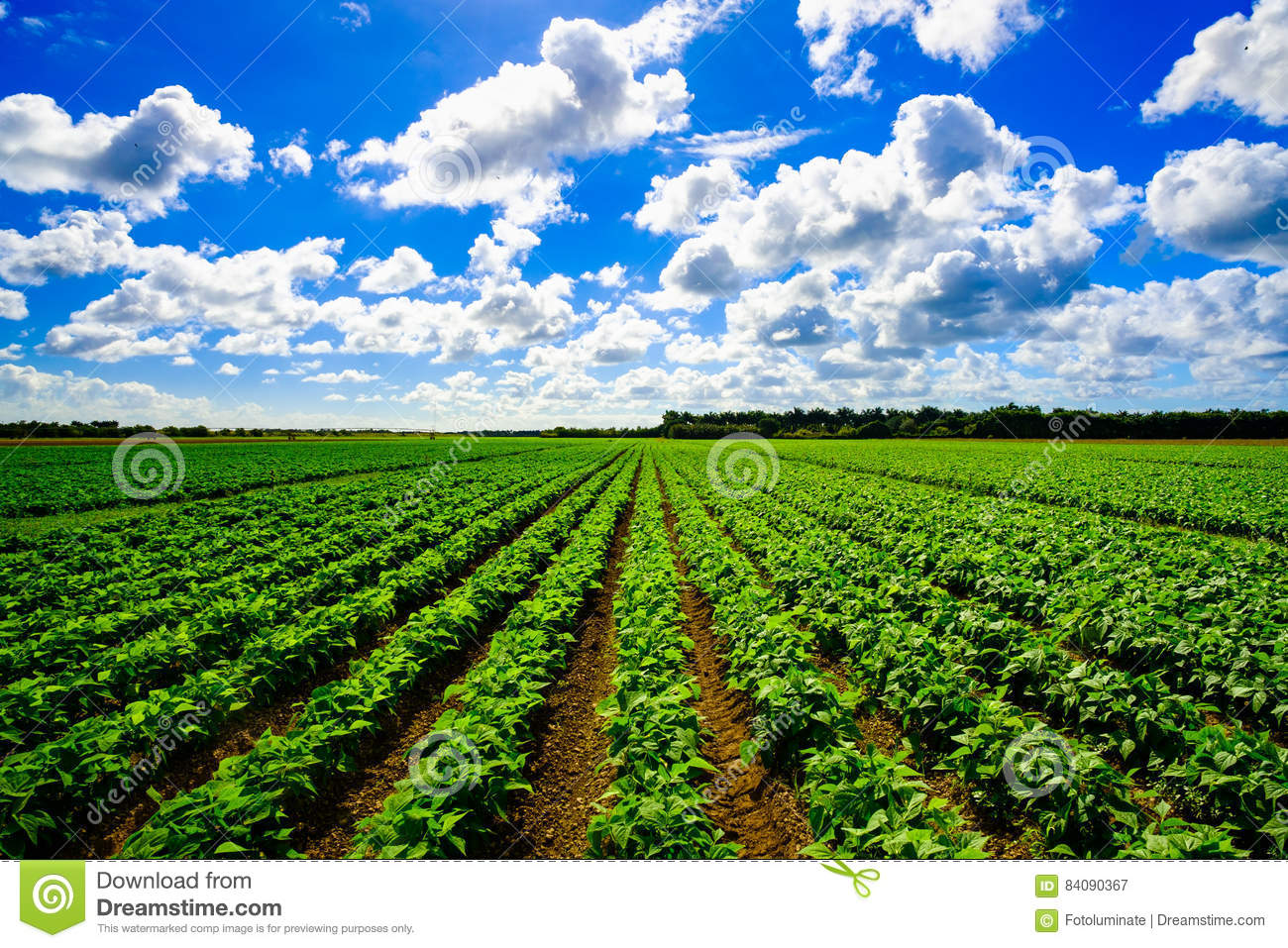 Agriculture vegetable field