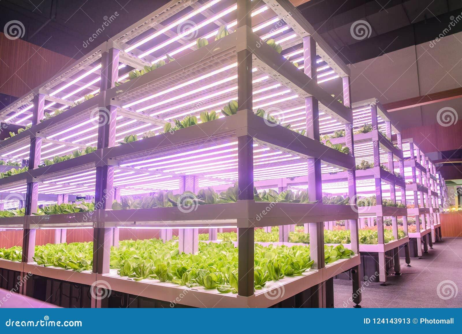 Agriculture verticale moderne