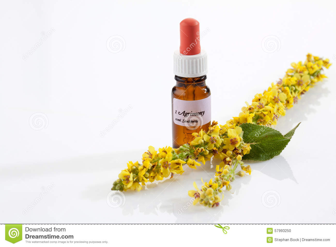 Agrimony Bach Flower Apothecary Flask Stock Photo Image Of