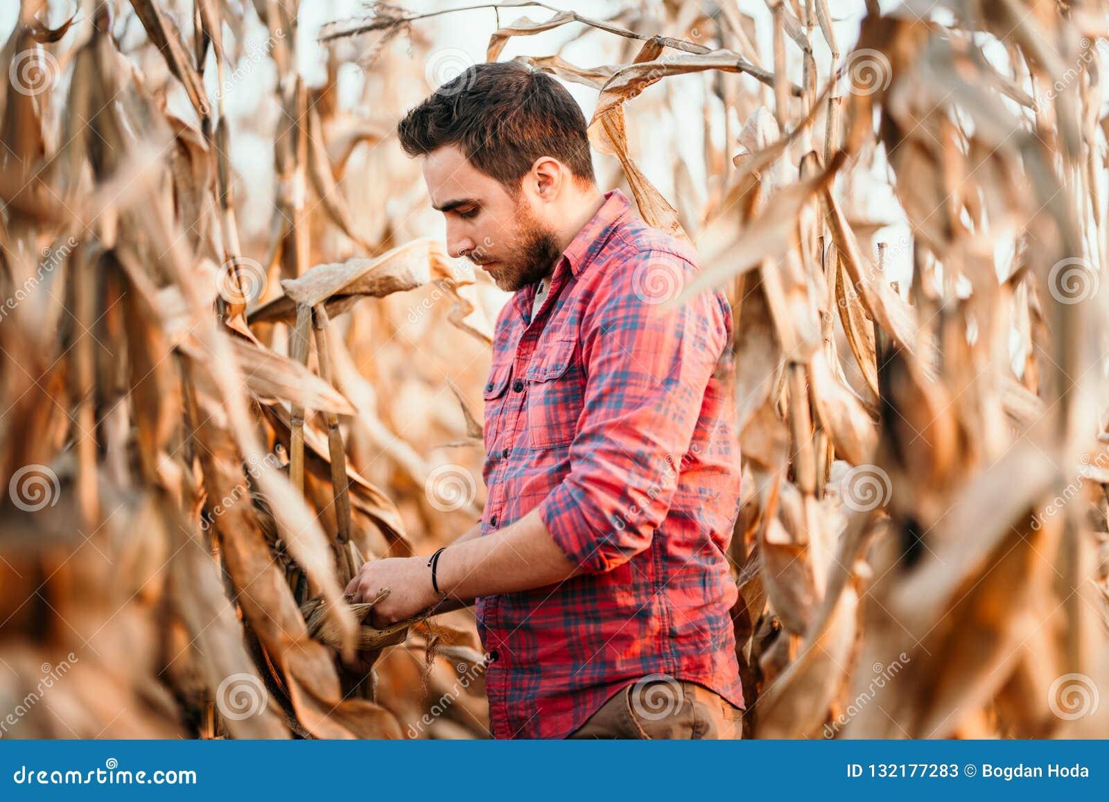 Agronom, der Mais überprüft, wenn bereit zu Ernte Porträt des Landwirts