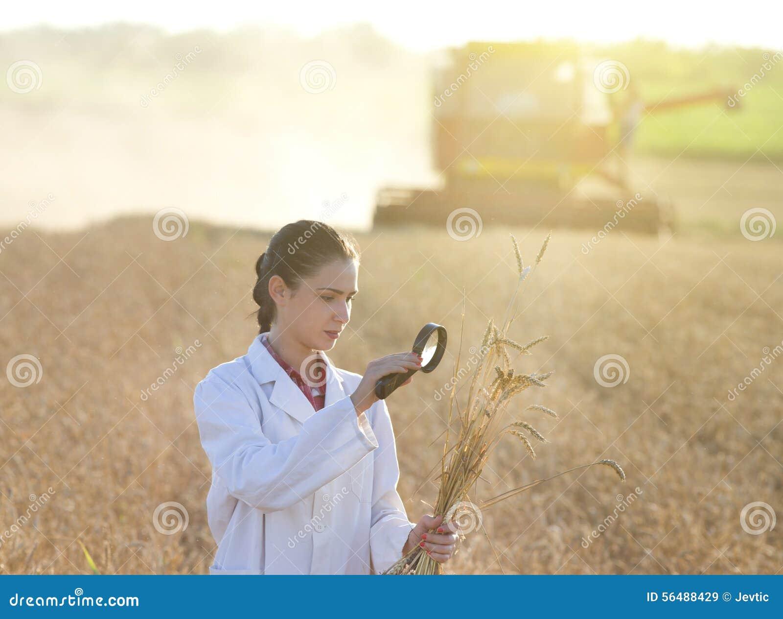Agronome de femme avec le magnifer dans le domaine
