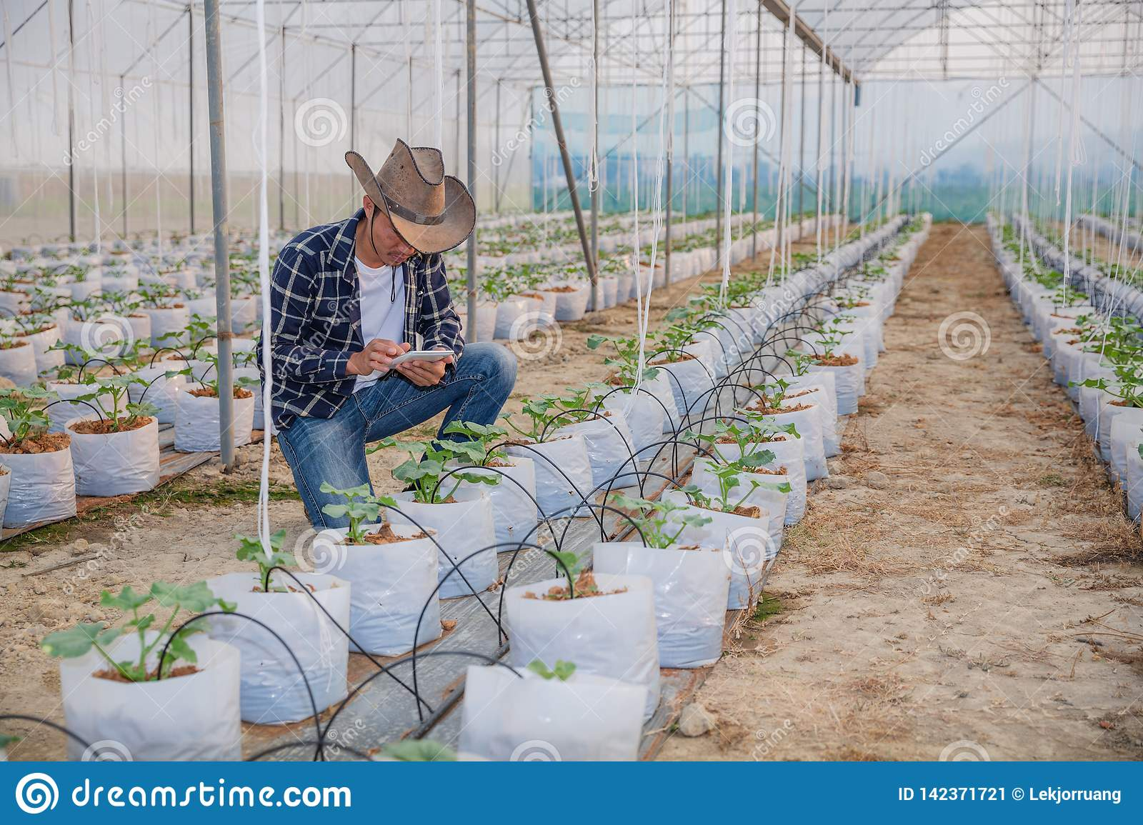 The agronomist examines the growing melon seedlings on the farm,  farmers and researchers in the analysis of the plant