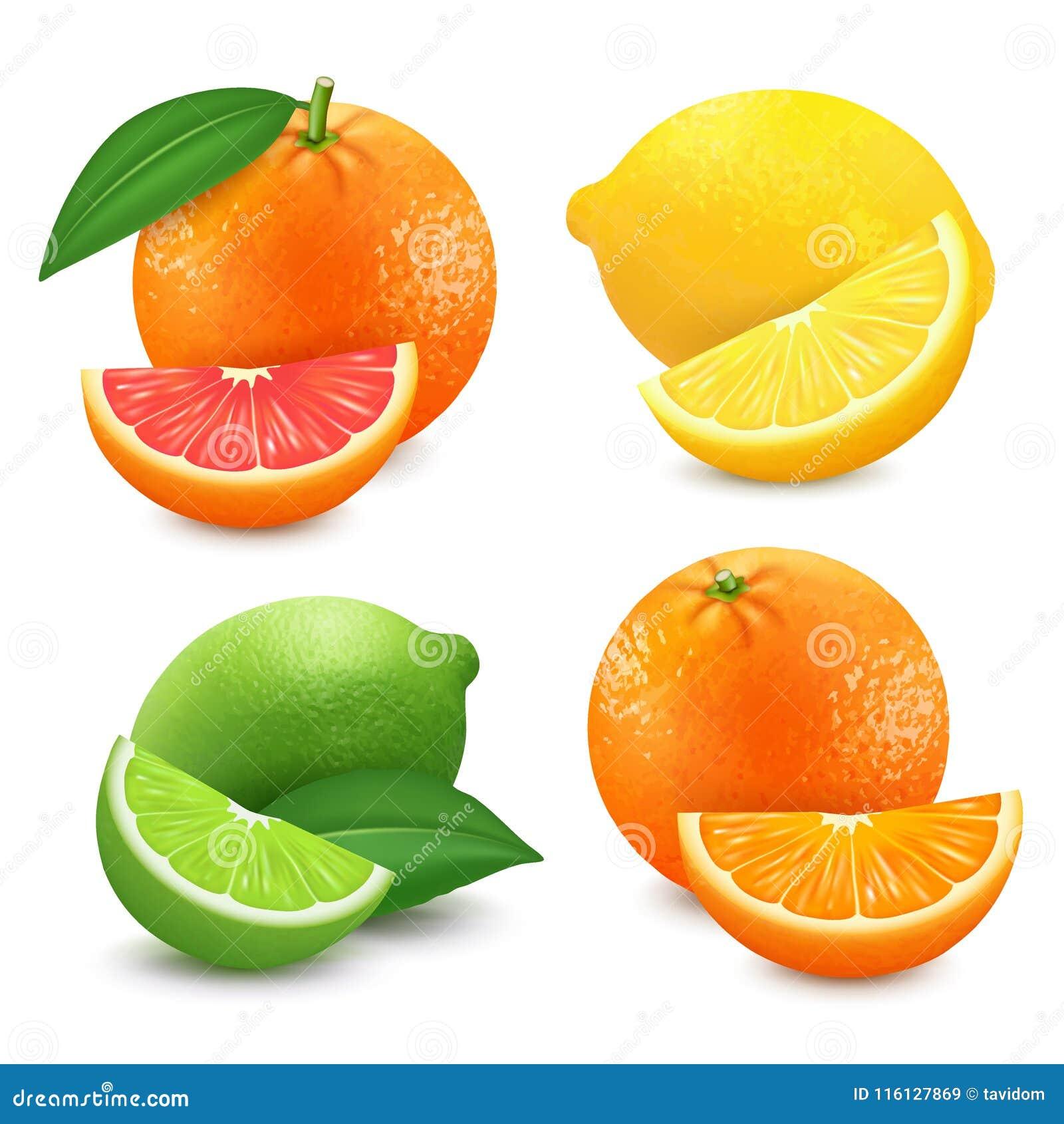 Agrumes frais réglés Illustration de vecteur d isolement par chaux orange de citron de pamplemousse vecteur 3D réaliste