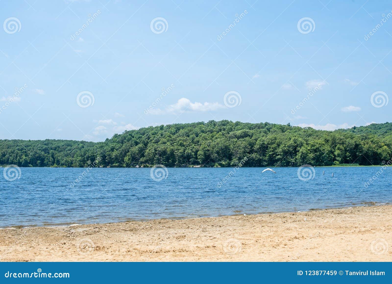 Agua azul lateral del lago con los árboles verdes