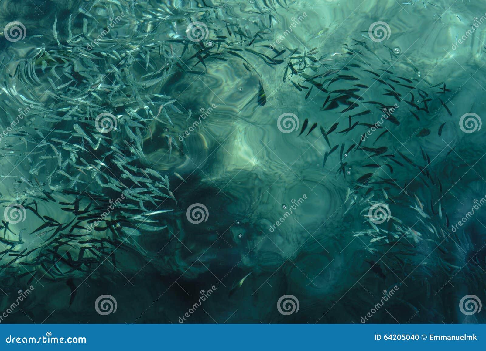 Agua de mar límpida con los pescados dentro