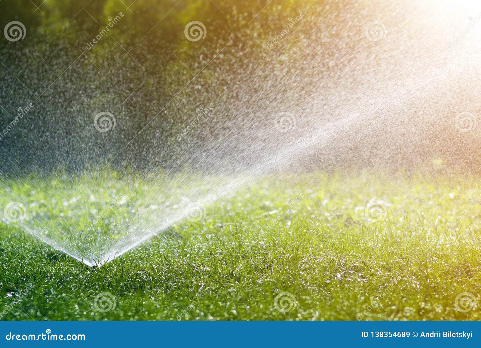 Agua de rociadura de la regadera del agua del césped sobre hierba fresca del verde del césped en jardín o patio trasero en día de