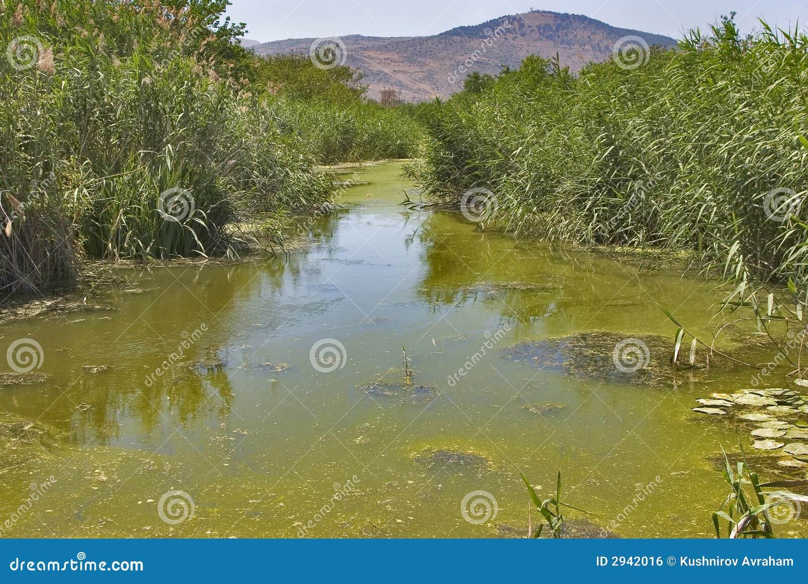 Agua estancada imagen de archivo libre de regal as for Peces de agua estancada