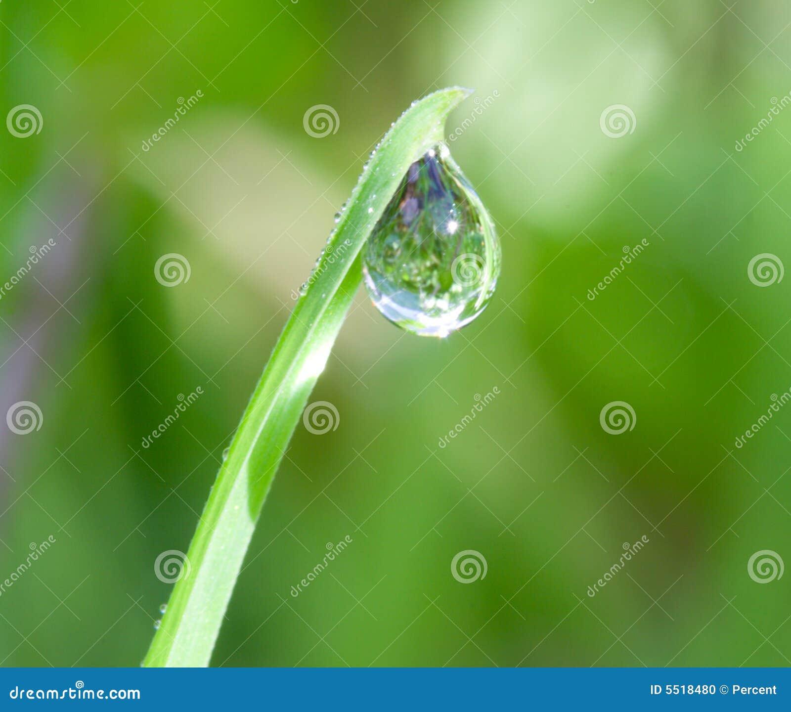 Agua-gota en la lámina