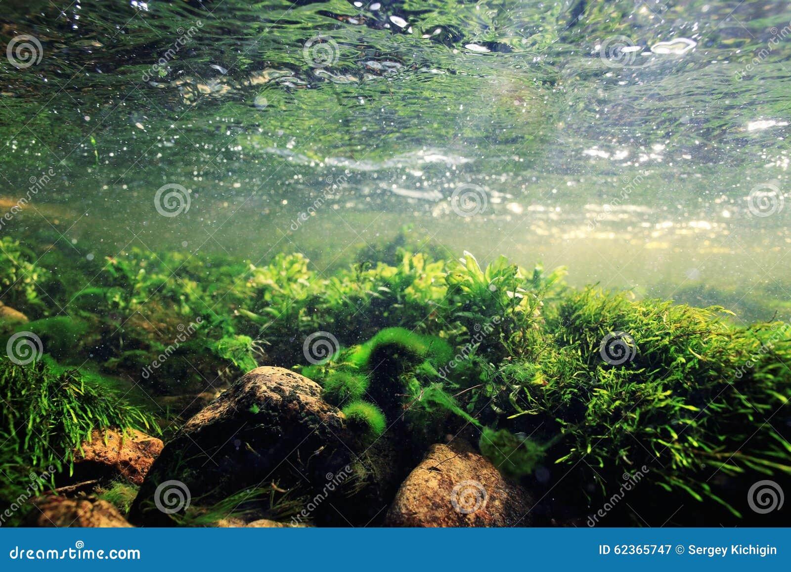 Agua potável subaquática do cenário