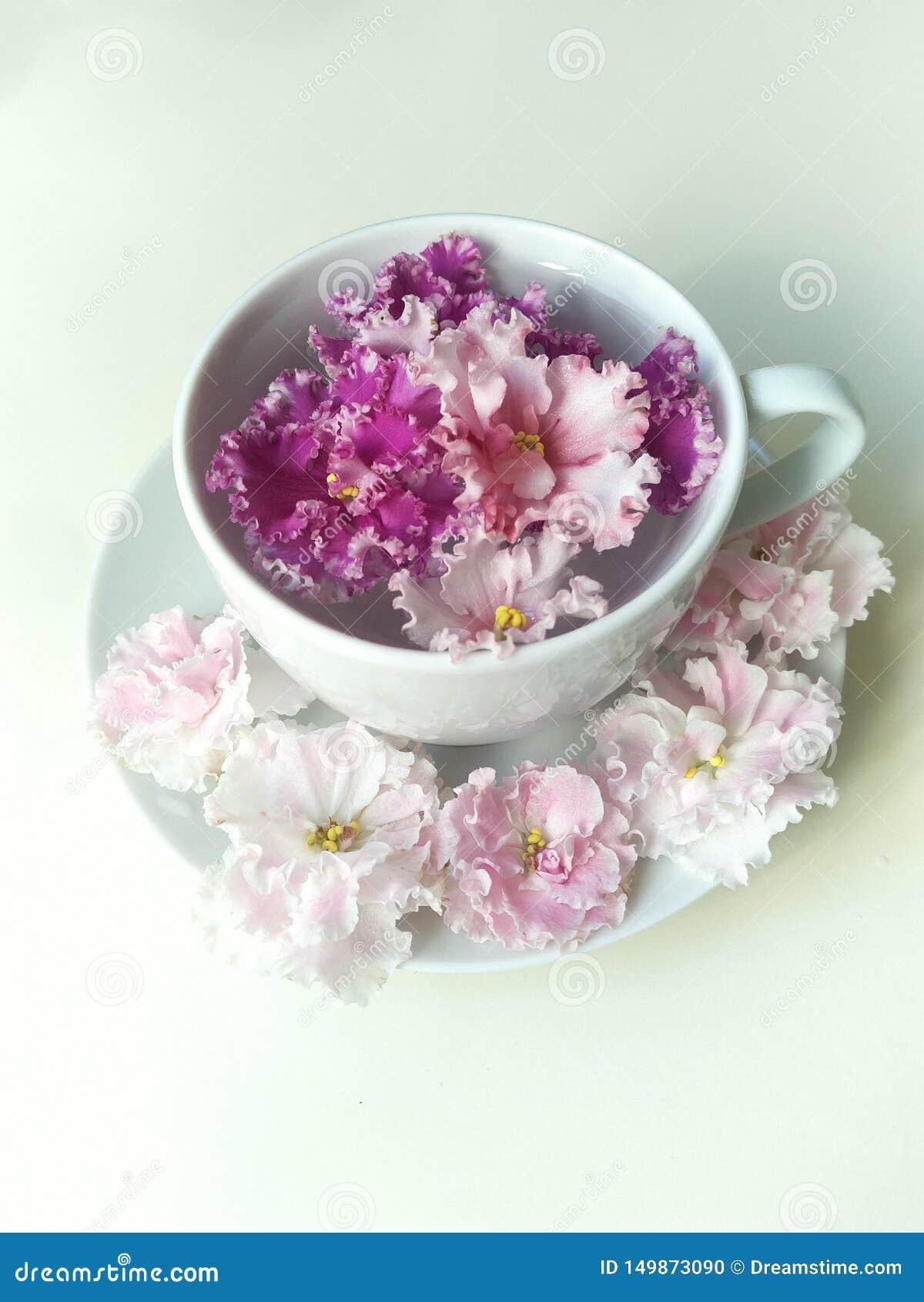 Agua pura en una taza y un platillo, una flor carmesí que flota en una taza, seis flores delicadas que mienten alrededor del plat