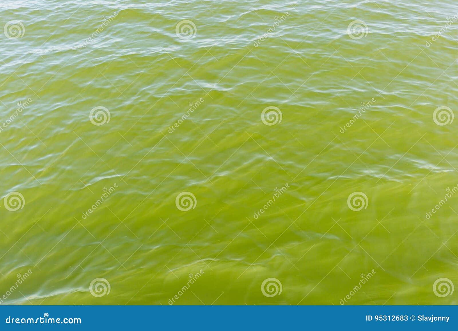 Agua Verde De La Piscina Con Reflexiones Del Sol Imagen De Archivo