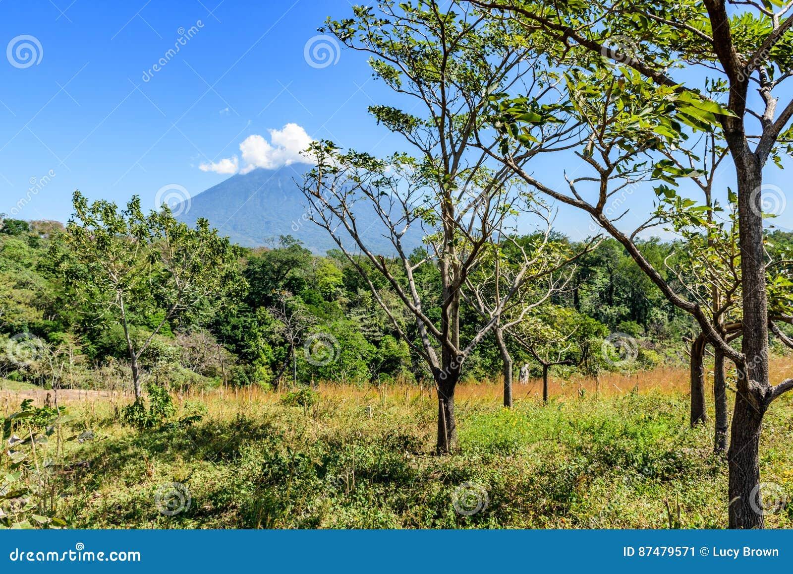 Agua volcano & woodland