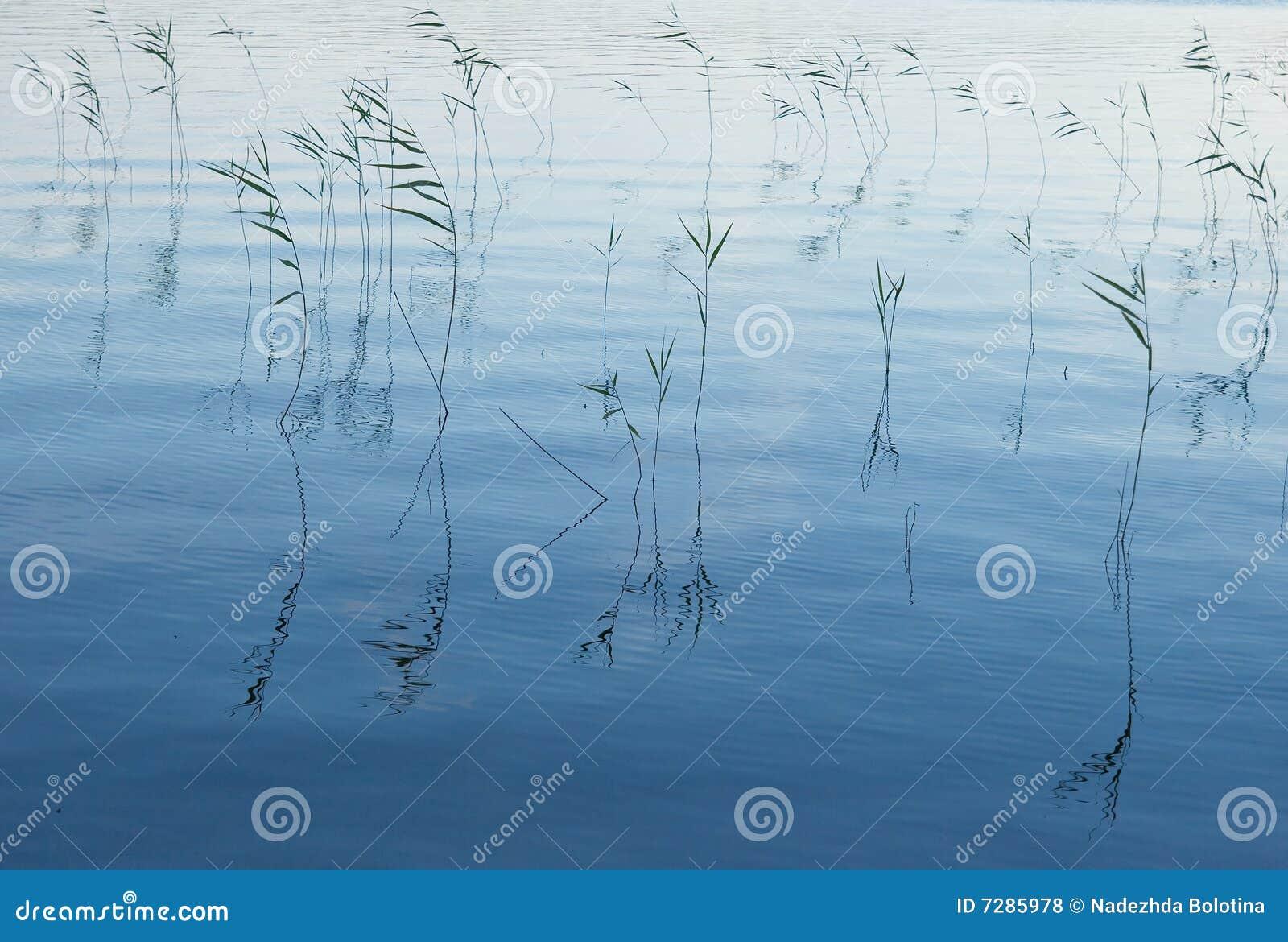 Aguas azules