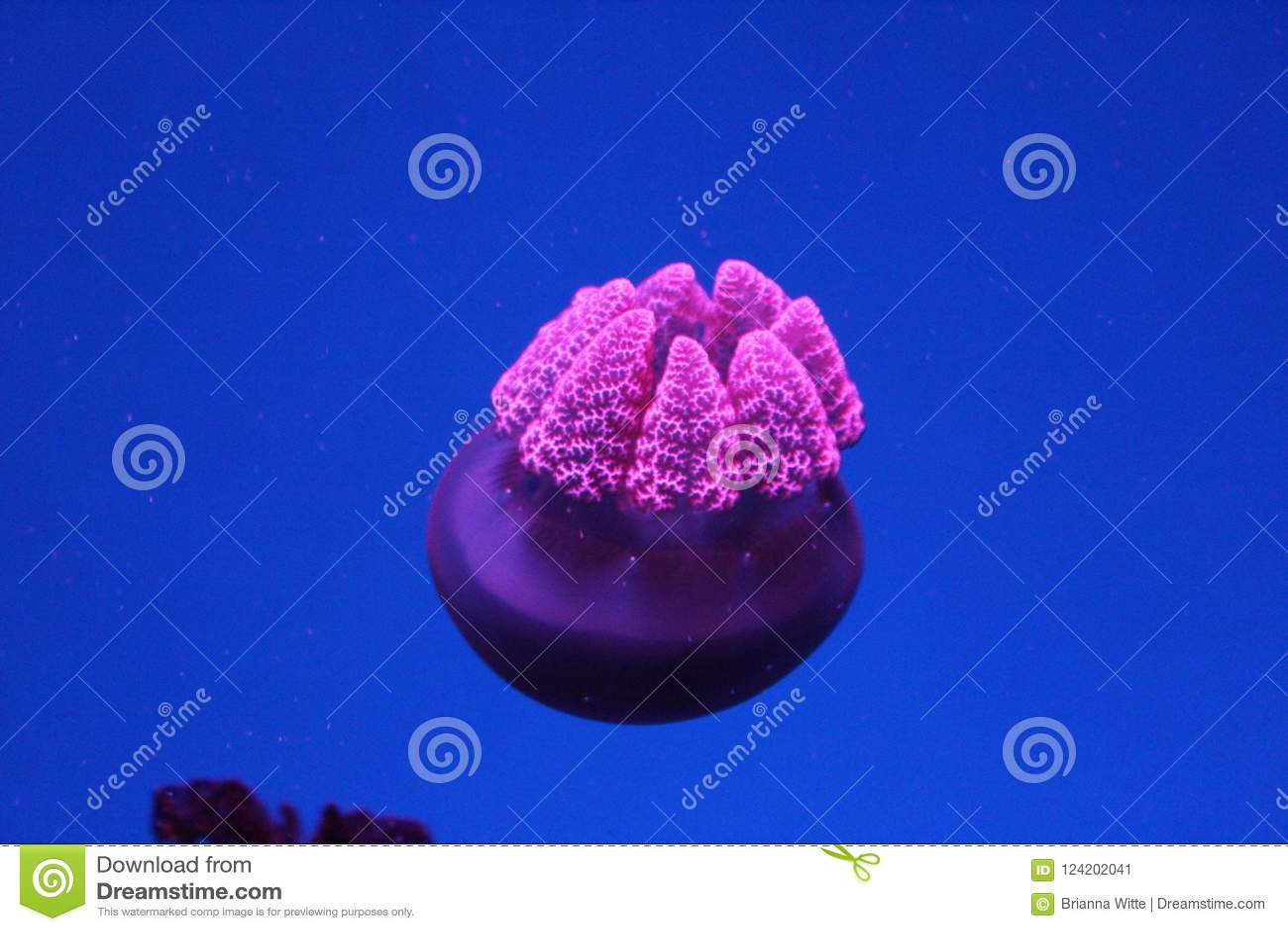 Aguijones púrpuras en el océano oscuro profundo