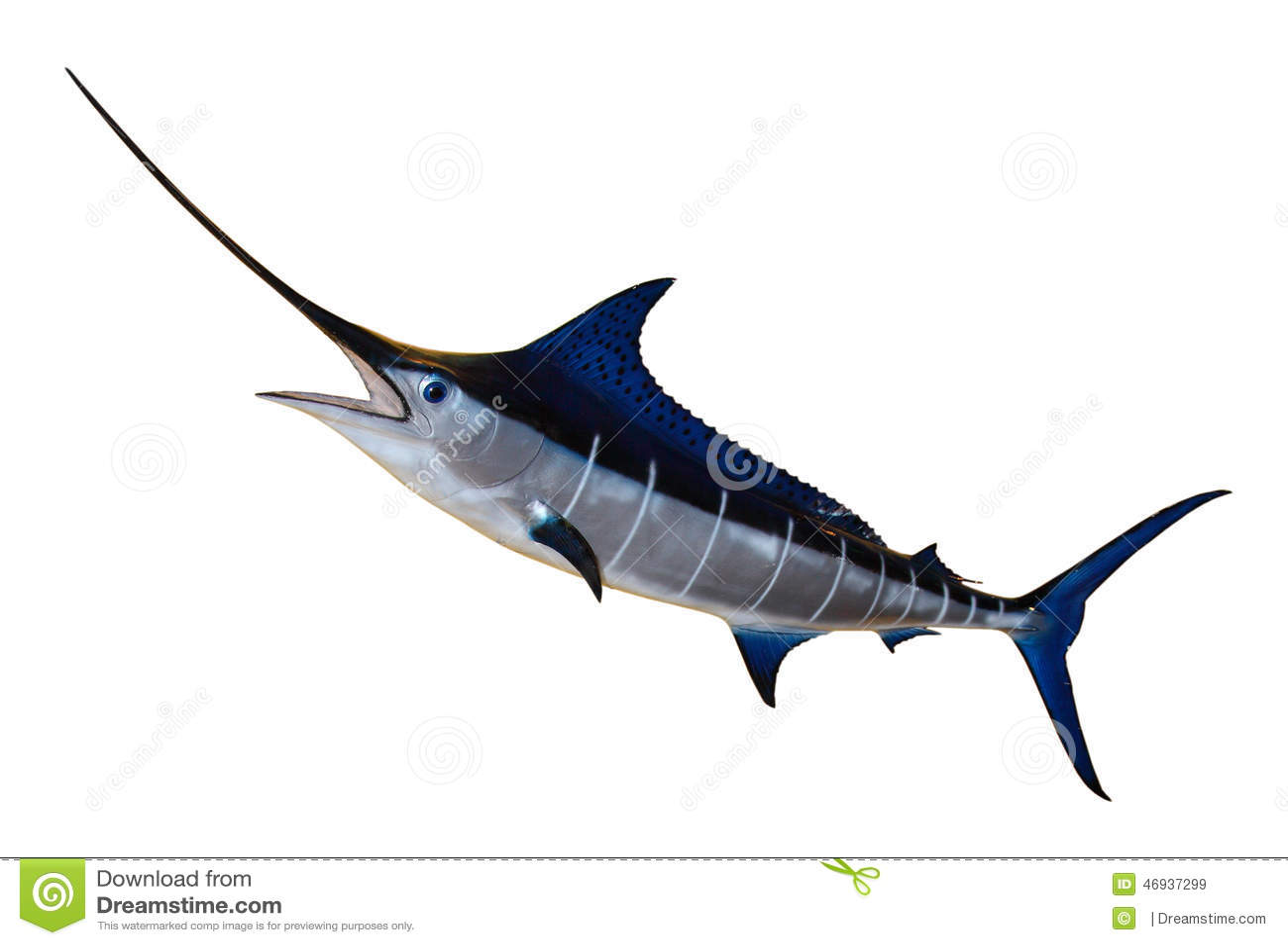 Aguja azul de los peces espadas