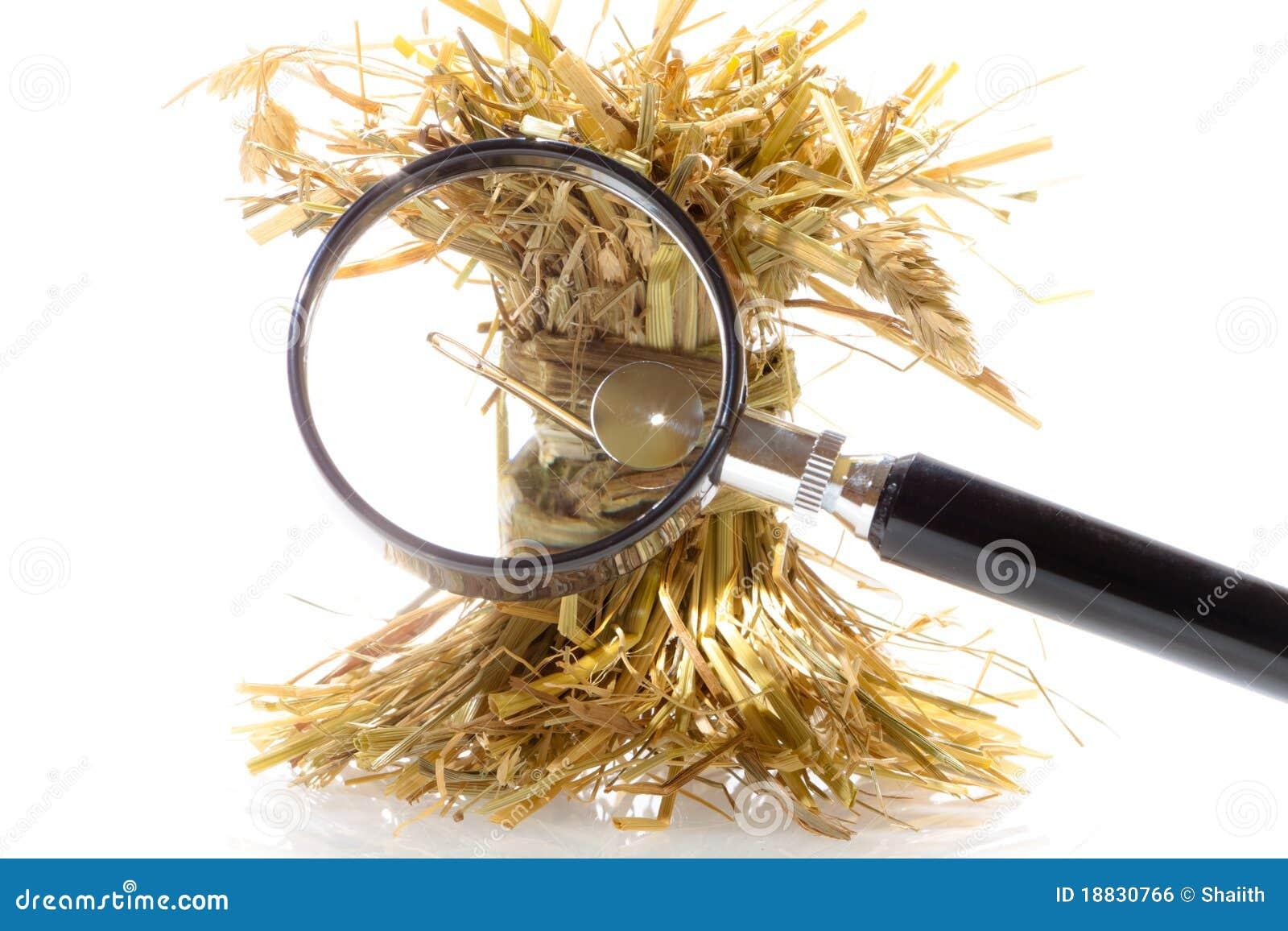 Aguja de la búsqueda en un haystack