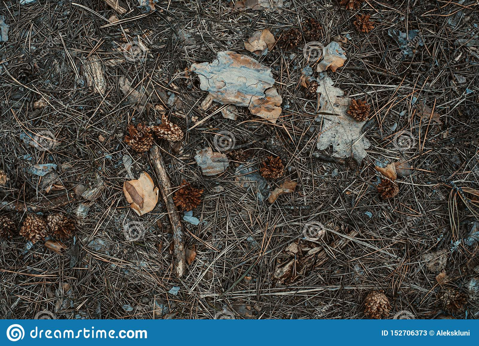 Aguja del Abeto-cono y fondo de las hojas derrochado Primer
