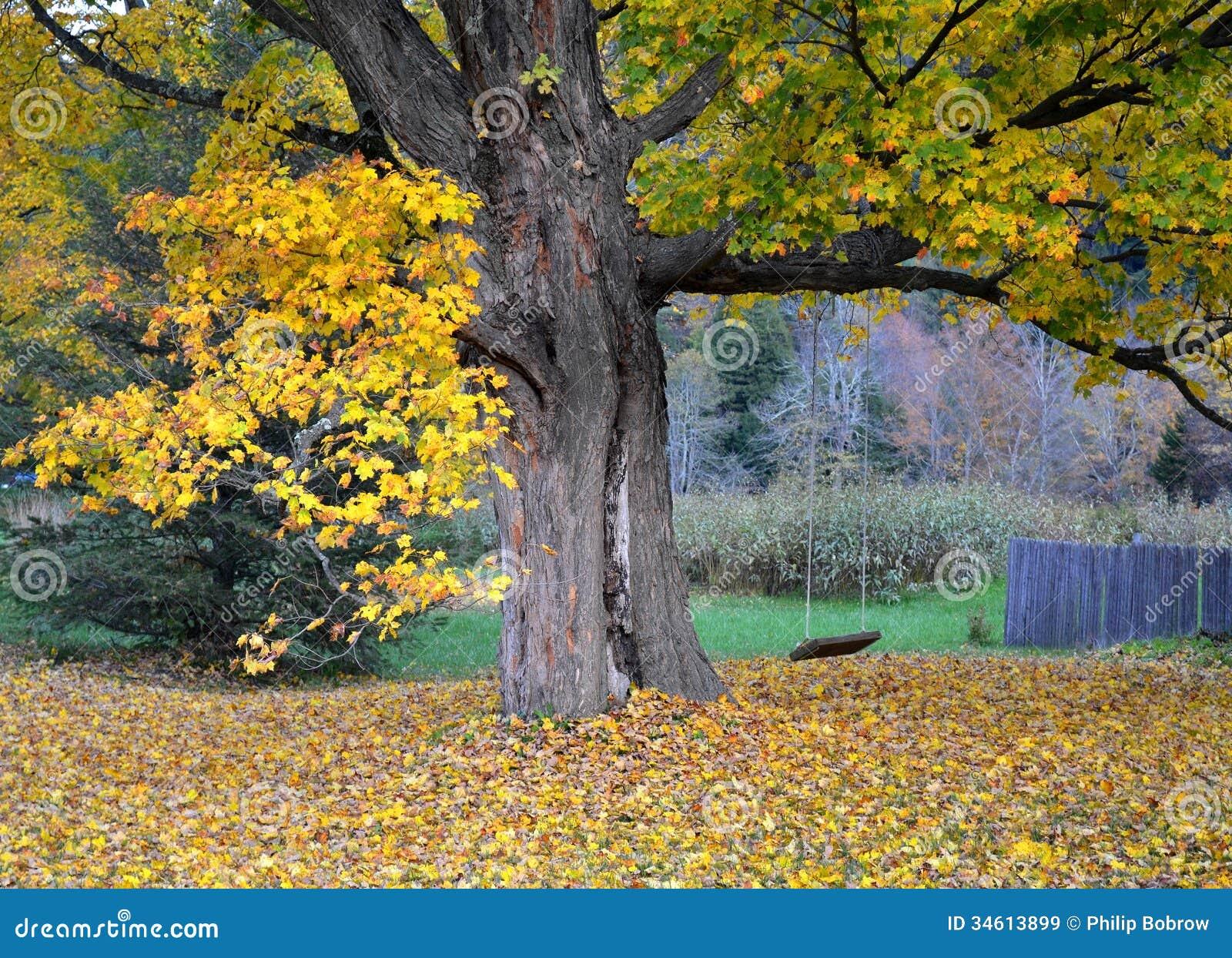 Ahornbaum und Schwingen