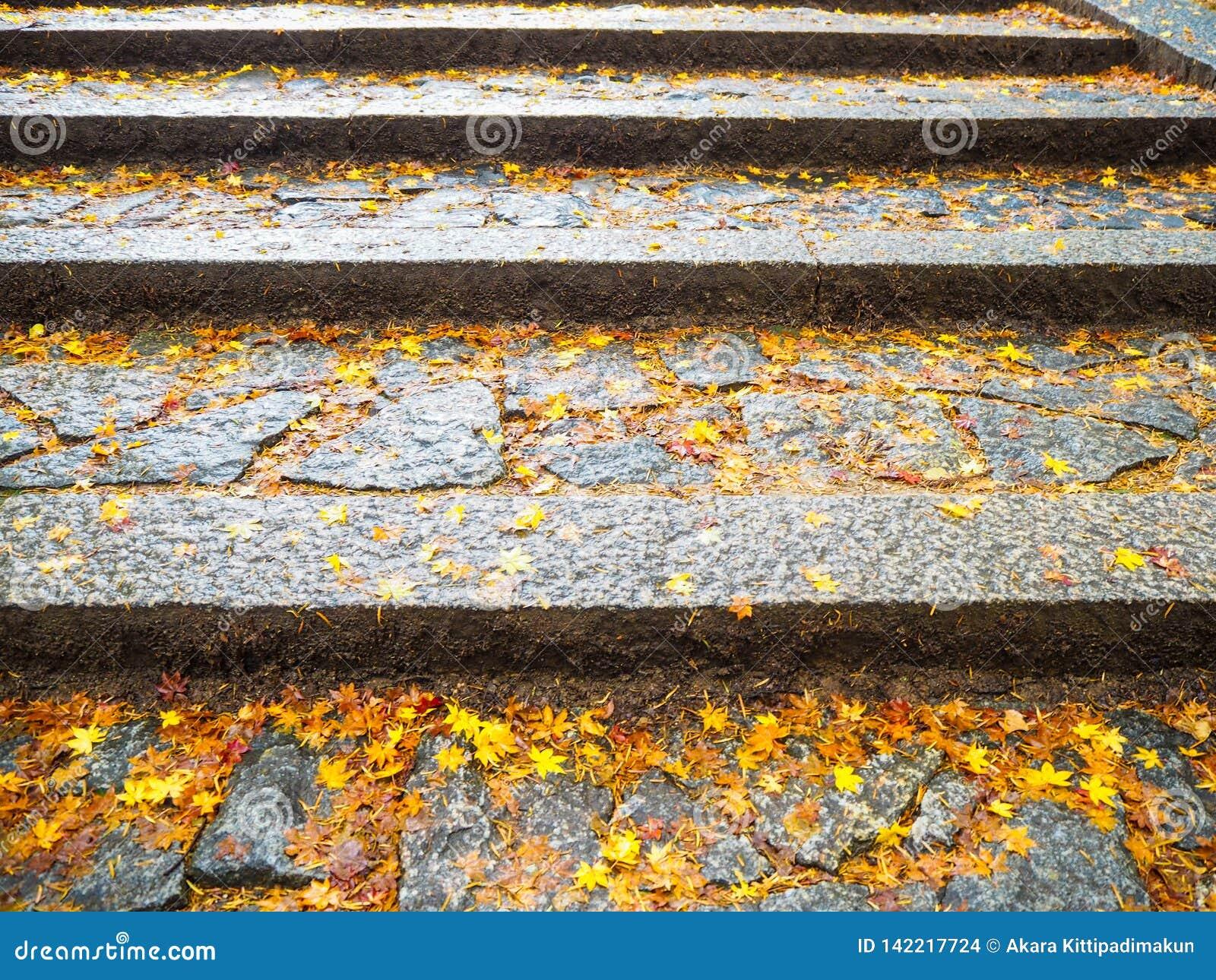 Ahornblätter fallen auf Treppe